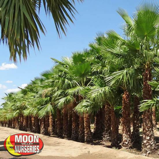palm_farm_2
