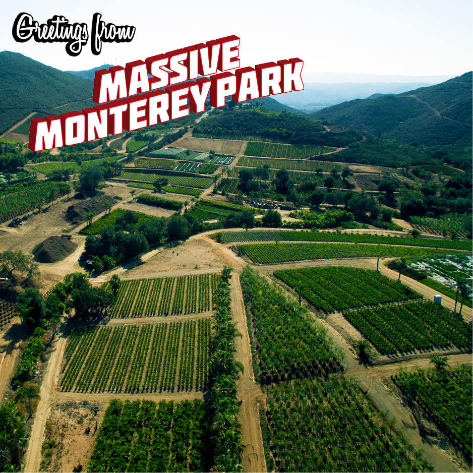 massive-monterey