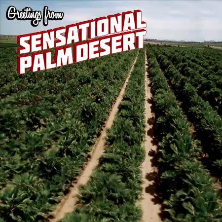 sensational-palm-desert