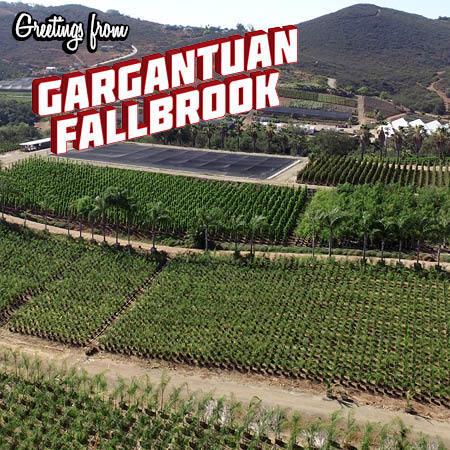 gargantuan-fallbrook