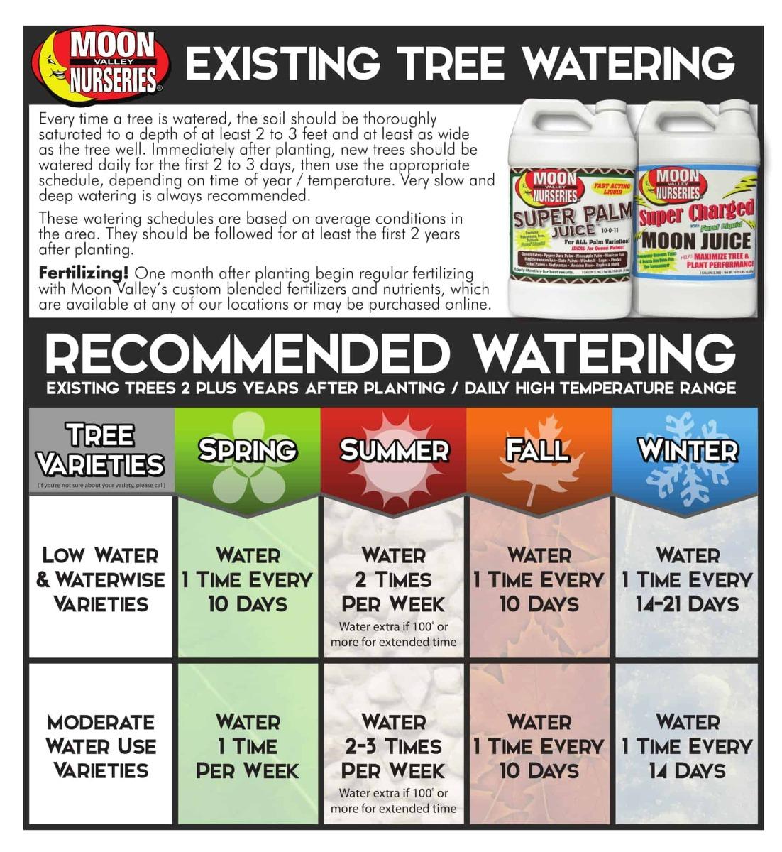Watering Mature Trees Schedule