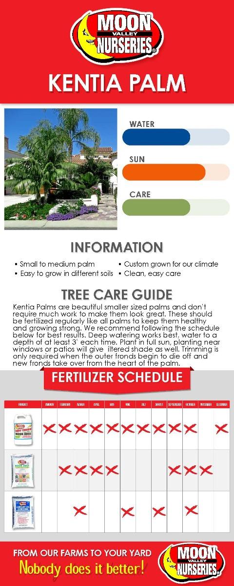 Kentia Palm care guide
