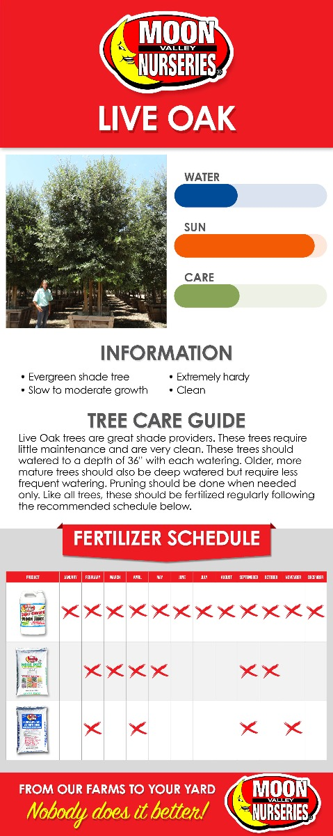 Live Oak care guide