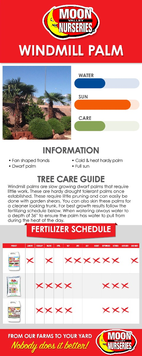 Windmill Palm care guide