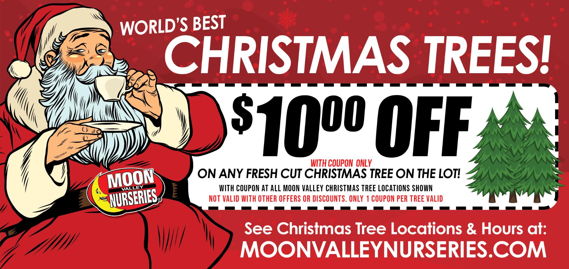 Arizona Christmas Trees   Trees   Moon Valley Nurseries