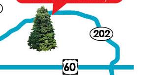 Mesa Gilbert tree