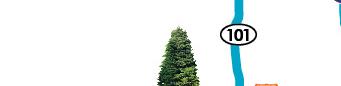 Avondale tree top