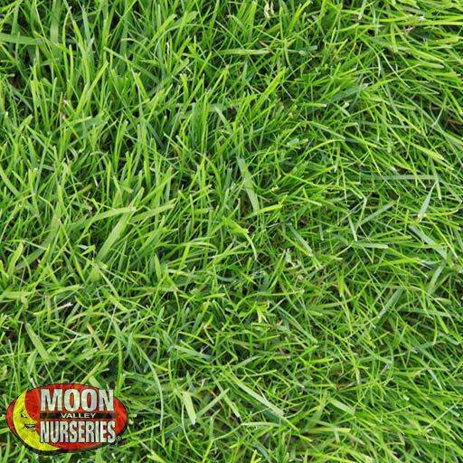 Sod E-Z Turf® Grass