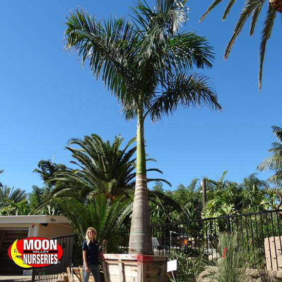 palm_paradise_15