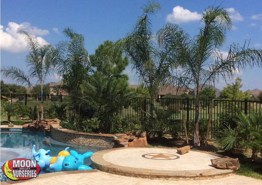 palms_around_pool_2