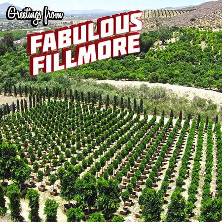 fabulous_fillmore