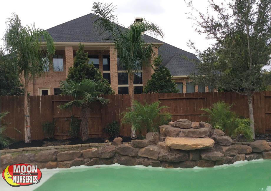 palms_around_pool