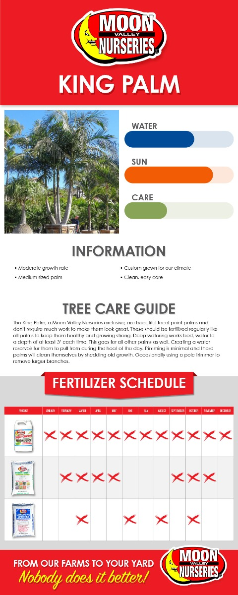 King Palm care guide