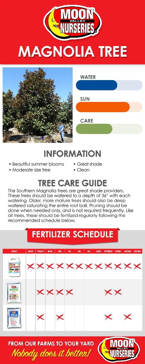 Magnolia Tree care guide