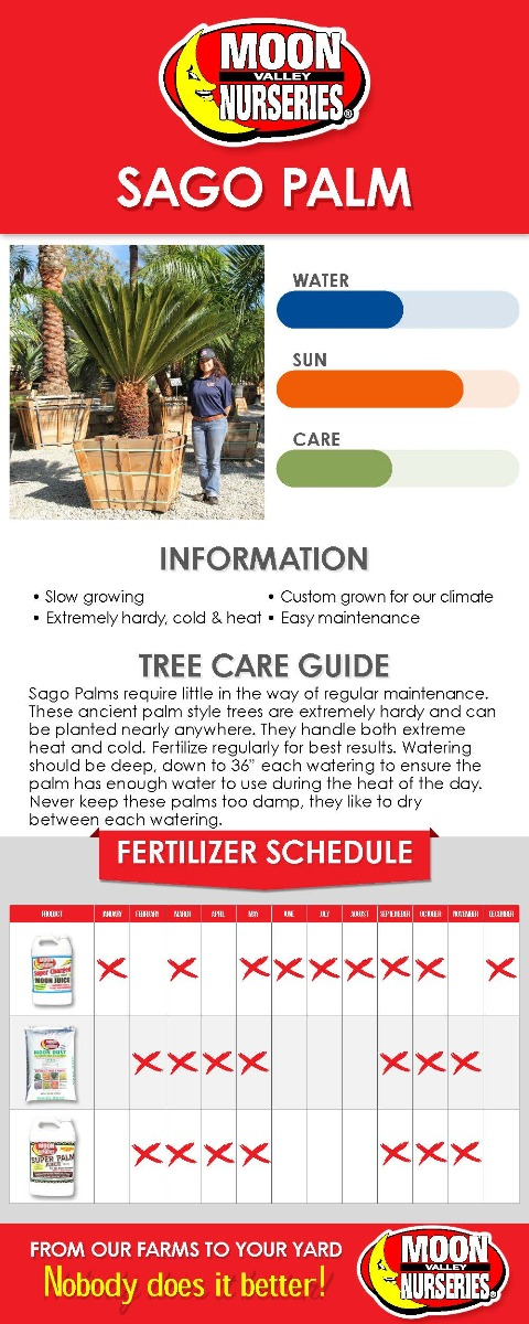 Sago Palm care guide