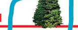 Tree bottom Glendale