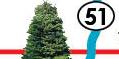 Tree top 7th st